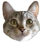 Muzz avatar