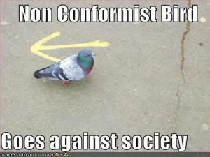 funny-pictures-non-conformist-bird