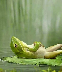 lazy-frog