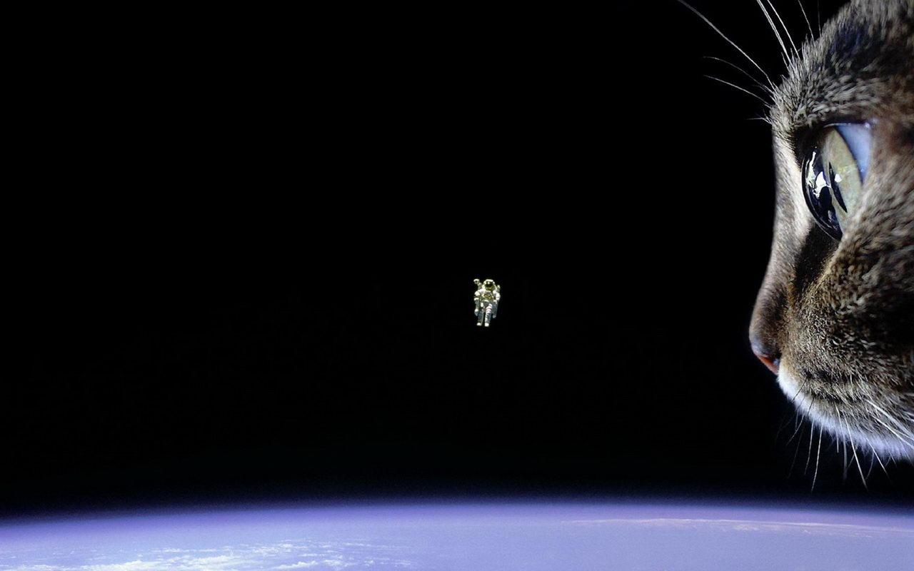 space-cat_1280x800.jpg