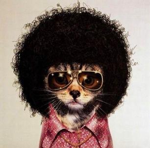 disco-kitty